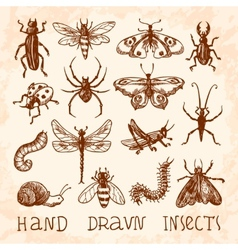 Insects sketch set vector