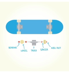 Blank skateboard and parts isolated vector