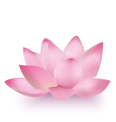 Photo-realistic lotus flower vector
