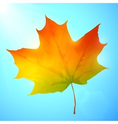 Golden autumn bright leaf in a blue sky vector
