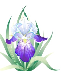 Holidays card with iris flower vector