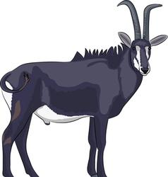 Goat v vector