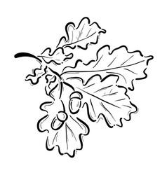 Oak branch vector