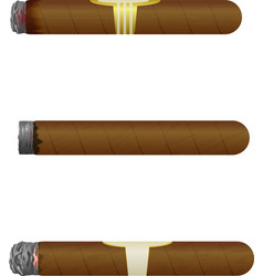Set of cuban cigars isolate on white background vector