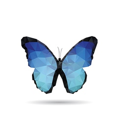 Butterfly isolated vector