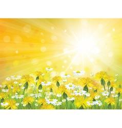 Sun flowers background vector