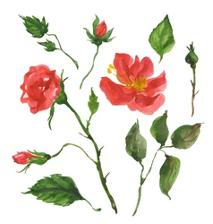 Wild rose flowers vector