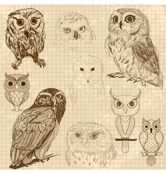 Set of retro owl sketches vector