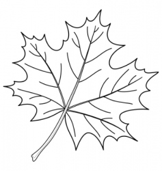 Leaf of a maple contour vector