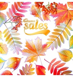 Autumn calligraphy sale on detailed leafs vector