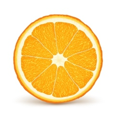 Fresh ripe orange vector