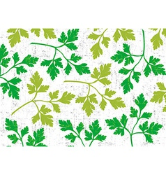 Parsley background on white vector