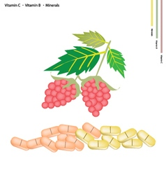 Raspberries with vitamin k b and minerals vector