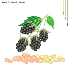 Blackberries with vitamin k b and minerals vector