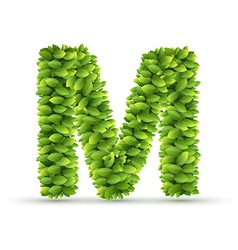 Letter m alphabet of green leaves vector