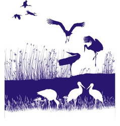 Storks on the shore vector