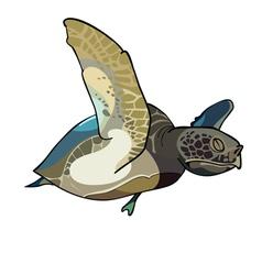 Turtle swim vector