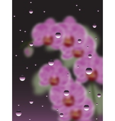 Pink orchids with the drops of water vector