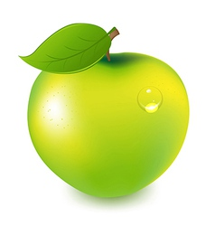 Green apple with water drop vector