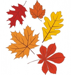 Collection of autumn leave shapes vector
