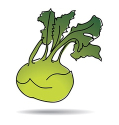 Freehand drawing kohlrabi icon vector