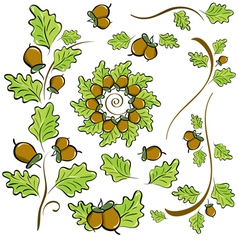 Design elements of oak leaves and acorns vector
