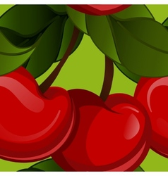 Bright jucy fresh cherry fruit  cherries vector