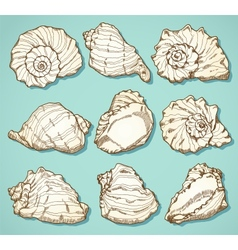 Seashell set in vintage style vector