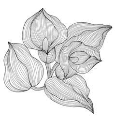 Decorative calla vector