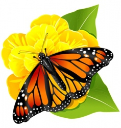 Monarch butterfly on the flower vector