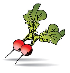 Freehand drawing radish icon vector
