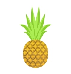 Isolated pineapple fruit on vector
