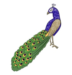 Hand drawing peacock 2 vector