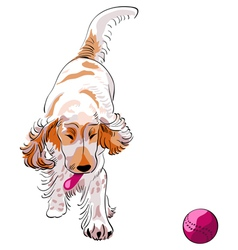 Cocker spaniel breed vector