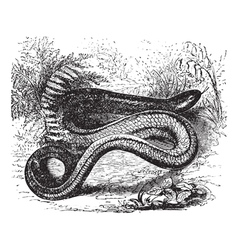 Slow worm vintage engraving vector