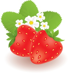 Strawberries with leaves and flowers vector