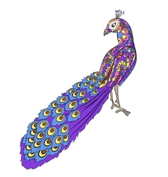 Stylized hand drawing peacock vector