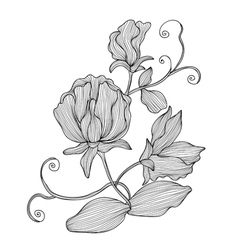 Decorative sweet pea vector