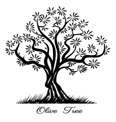Olive tree silhouette vector