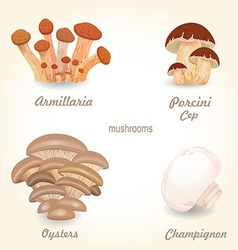 Collection of isolated edible mushrooms for your vector