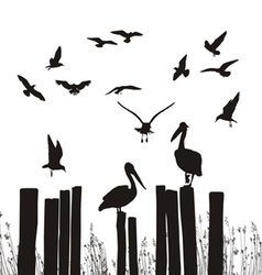 Gulls and pelicans vector