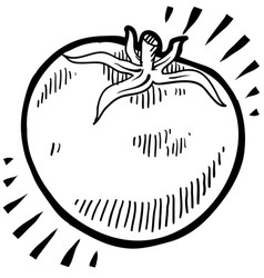 Doodle tomato vector