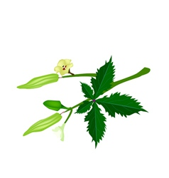 A stem of okra on white background vector