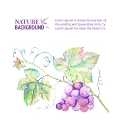 Card with grape leaves vector
