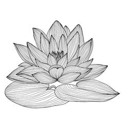 Decorative lotus vector