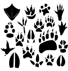 Traces of birds and animals vector