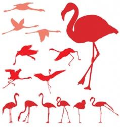 Pink flamingo set vector