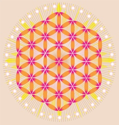Sacred geometry flower of life stars vector