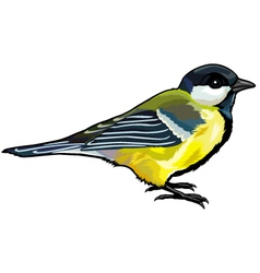 Great titmouse vector