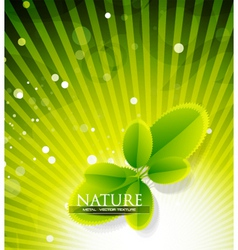 Evergreen nature vector